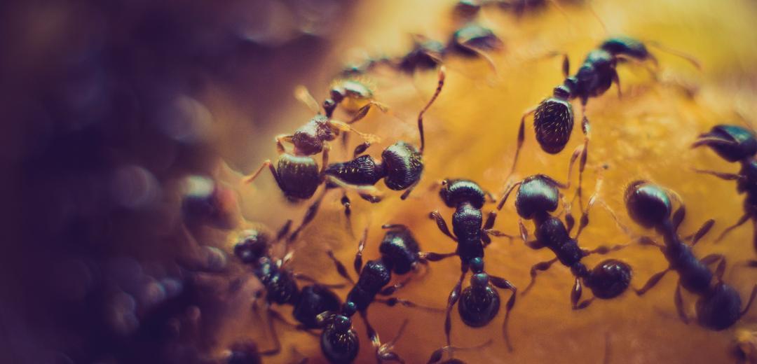 5 regras que as formigas podem ensinar para a sua comunidade online