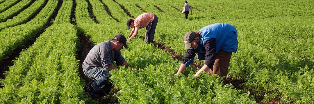 As cooperativas de agricultura familiar e o mundo VUCA
