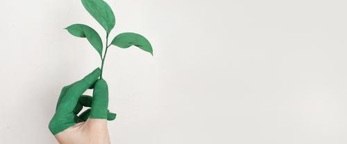 Muito além do trend, como identificar greenwashing