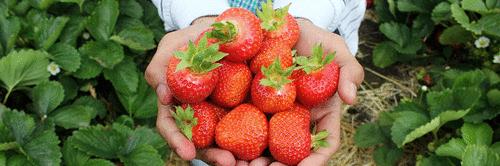 As cooperativas de agricultura familiar e a análise SWOT